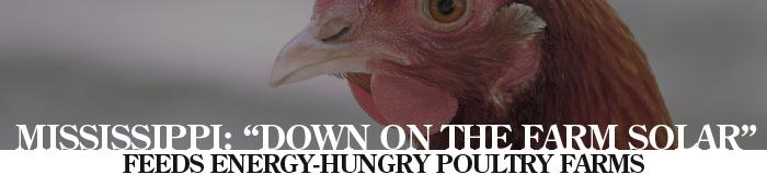 MISSISSIPPI: �Down on the Farm Solar� Feeds Energy-Hungry Poultry Farms