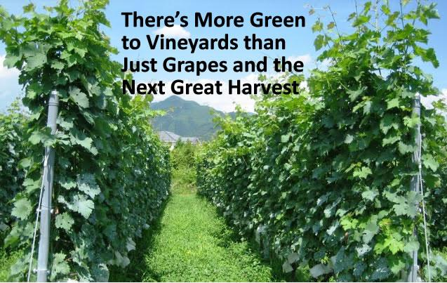 There's More Green to Vineyards than Just Grapes and the Next Great Harvest