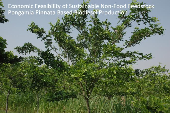Economic Feasibility of Sustainable Non-Food Feedstock Pongamia Pinnata Based Biodiesel Production