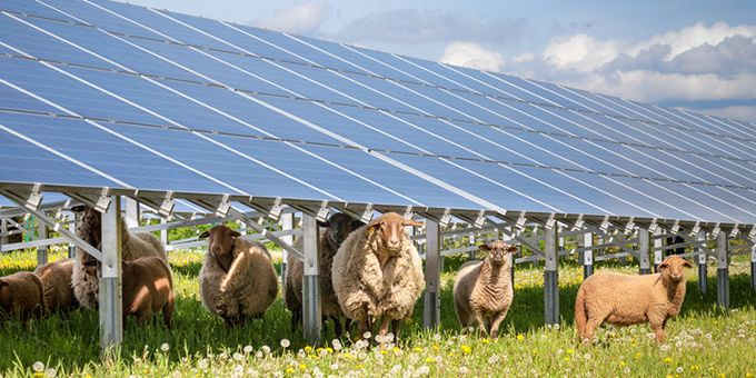 Literal Solar Farms - When Agriculture and Solar Meet