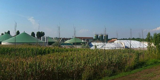 Biogas as a Blending Gas to Decarbonize Natural Gas Networks