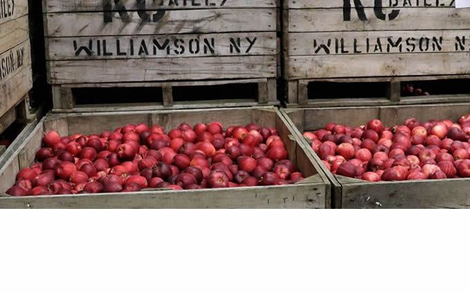 S-5-PVKIT®2.0 & S-5-S Mini - KC Bailey Orchards Case Study